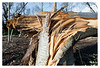Victims of Storm David, January 18 2018 _ 4 (leo.roos) Tags: fallentree blownover uprooted broken omgewaaideboom trees storm gale stormdavid january182018 codered sollebos distagon1835zf carlzeiss carlzeissdistagon1835zf2 leitax amount distagon1835zf2 distagon carlzeissdistagon1835 cz a7rii darosa leoroos dayprime day18 dayprime2018 dyxum challenge prime primes lens lenses lenzen brandpuntsafstand focallength fl