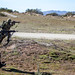 Japan Ground Self-Defense Force exercises with U.S. Marines at Camp Pendleton