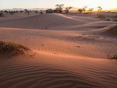 Sunrise light (Melvinia_) Tags: olympusomdem1 namibia namibie desert désert namibrand naukluft namibrandfamilyhideout landscape sand africa afrique afriqueaustrale sunrise leverdesoleil geoafrica
