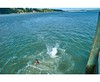 Pahi Wharf  (3) GIF - Open in original size (C & R Driver-Burgess) Tags: teen young boy girls leap jump harbour wharf sea kaipara brother sister girlfriend nephew niece son daughter shorts halter top green blue clear sky sunny summer splash