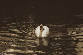 My soul is an enchanted boat, Which, like a sleeping swan, doth float Upon the silver waves of thy sweet singing.