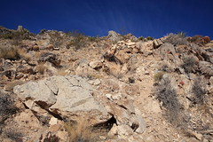 Providence Mountain (Dawn Coyote) Tags: mojave national preserve providence mountains state recreation area
