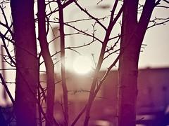 Sunset Thursday 22-2-1018 II (CloudBuster) Tags: sun sunset zonsondergang thursday donderdag february februari winter koud cold yellow geel orange oranje bruin late afternoon namiddag