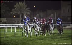 IMG_7221 copy (Services 33159455) Tags: qatar doha horse racing qrec emir horseracing raytohgraphy