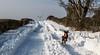 Bouncing along! (allybeag) Tags: tallentirehill snow winter sunny snowdrifts kiri dog windturbine road tyretracks bouncing running