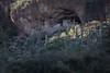 Tonto National Monument (Edmonton Ken) Tags: tonto national monument arizona tourism tourist travel vacation destination indigenous cliff dwelling adobe saguaro cactus saladostyle sonoran desert salt river valley