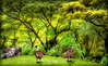 HAWAIIAN COUPLE (Sandy Hill :-)) Tags: nene hawaiiangeese geese goose raregeese endangeredgeese beautiful tropical kauai painting art composite nature trees colorful sandyhill