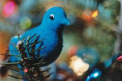 The Blue Dove (Jetcraftsofa) Tags: nikonf3 vivitar5528macro sb24 speedlight portra160 35mm slr filmphotography flashphotography bluebird dove pines bokeh dof memory