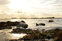 All Washed Up (alyssamayphoto) Tags: river florida sunset water titusville photography
