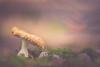looking for the light (Javy Nájera) Tags: javynájera larioja aproximación bosque macro pinos seta sera hongo pequeño diminuto desenfoque cerca naturaleza paisaje forest approximation pines mushroom small tiny blur fence nature landscape