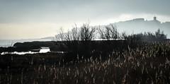 DSC_8046 (Thierry AUGE) Tags: sea mer bages languedoc occitanie france southoffrance aude nikon d750 fullframe pleinformat fx paysage landscape minimalist hiver winter