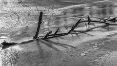 Im letzten Jahr / Last year (ludwigrudolf232) Tags: treibholz eis wasser fluss