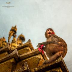 Asia / Nepal / Kathmandu / Swayambhunath (Pablo A. Ferrari) Tags: pabloferrariart nepal asia kathmandu architecture historical unesco temple swayambhunath stupa swoyambhu buddhism monkey bird templo ornaments history historicalplace