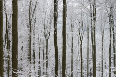 29/50 project 50 mm (Thea Teijgeler) Tags: sauerland sneeuw bos bomen