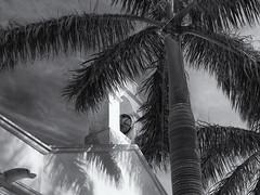 Church bell (Tim Ravenscroft) Tags: church bell palm bocagrande florida hasselblad hasselbladx1d x1d monochrome blackwhite blackandwhite