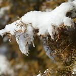 Spitzen fotografiert 014 thumbnail