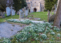 Snowdrops in the graveyard (keithhull) Tags: snowdrops churchyard graves stmarys thame oxfordshire england
