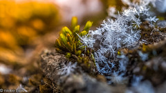 Icy-15 (niekeblos) Tags: snow icy moss nature macro bokeh winter crystals crystal canon60d
