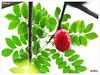 Seriguela (Ju Emery) Tags: juemery seriguela siriguela ciriguela fruta fruit red vermelho quintal backyard bsb brasilia cerrado brasil brazil hummm yummy delicious delicia natureza nature