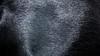 Dobermann coat (zola.kovacsh) Tags: indoor animal pet dog show display exhibition doberman dobermann pinscher portrait