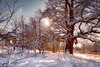 Mote Park sun (MarkandJackiephotos) Tags: purple sun park motepark kent bushes landscape snowy