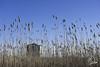 Flying Reeds (uselessbay) Tags: 2017 beach charlestown eastbeach nikon nikond700 places rhodeisland uselessbayphotography williamtalley williamtalleyjr d700 digital fullframe uselessbay usa ngc