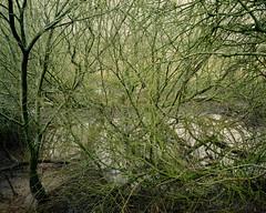 Trees Tangle º (CactusD) Tags: brandonmarsh brandon marsh naturereserve warwickshire england uk unitedkingdom gb united kingdom greatbritain great britain 5x4 4x5 linhof technikardan tks45 s45 largeformat large format schneidersupersymmar110mmxlf56 supersymmar 110mm f56 film fujifilm fujichrome velvia50 velvia tetenal e6 homedeveloping homeprocessed jobo cpe3 tilt shift tiltshift movements pce 85mmf28pce 85pce 85mm f28 fx nikon d800e trees marshland woodland water details texture