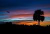 Sunset in Babcock Wildlife Management Area, Punta Gorda, Florida (diana_robinson) Tags: sunset dramaticsky palmtree babcockwildlifemanagementare puntagorda florida babcockwildlifemanagementarea