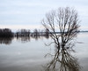 Hoogwater 2018 12 (megegj)) Tags: gert flood hoogwater