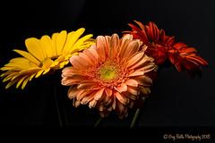 Three Amigos (Greg B Photography) Tags: sb600 speedlight offcamera