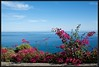 2017-09-07-Isole Eolie-DSC_0041.jpg (Mario Tomaselli) Tags: bougainvillea fiori flower isoleeolie mare panarea sea