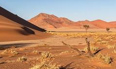 Namib Desert Landforms (gecko47) Tags: desert sand dunes namibnaukluftpark sossusvlei sesriem hardap landscape morninglight trees log grass rocks