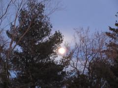 ** Lune du 30 janvier 2018 ** (Impatience_1) Tags: lune moon pleinelune fullmoon arbre tree ciel sky impatience jf explore explorer xplor naturallywonderful saveearth alittlebeauty abigfave supershot coth coth5 ngc fantasticnature sunrays5 npc
