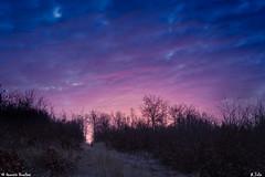 Matin en forêt (Quentin Douchet) Tags: aisne forêt france hautsdefrance nature ciel forest foret landscape leverdesoleil paysage sky sunrise