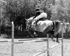 Hanging midair... (Michele's POV) Tags: thoroughbredhorse sleek structure powerful suspended freezemotion powertoweightratio hanging jumping athleticism monochrome blackandwhite bnw bw