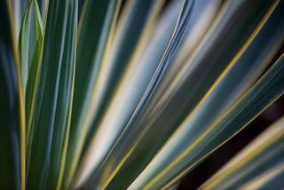 Foliage Abstract