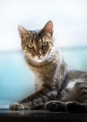 Mac (Katarina Drezga) Tags: cats cat catphotography petphotography pets domesticcat feline felines nikond750 tamron70200vcg2