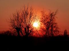 2018-02-22 sunset (6)f (april-mo) Tags: sunset coucherdesoleil nord france villerscampeau trees baretrees orange branches