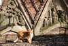 Cat near Domtoren (Utrecht) (PaulHoo) Tags: fujifilm x70 candid streetphotography utrecht city urban 2018 cat animal pet statue art historic architecture wall sun domtoren