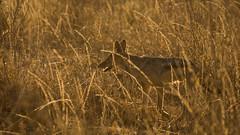 Nairobi-Nationalpark-1936 (ovg2012) Tags: kenia kenya nairobi nairobinationalpark