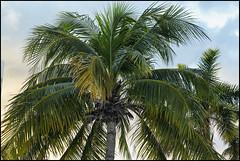 _SG_2017_11_0757_IMG_4001 (_SG_) Tags: mexiko mexico urlaub holiday roundtrip rundfahrt méxico méjico vereinigte mexikanische staaten spain spanish flag united mexican states estados unidos mexicanos cancun beach feeling ocean sun wave relax sand