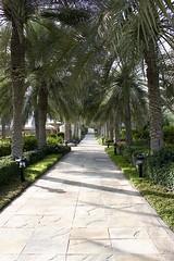 IMG_0416 (Hello Baton Rouge) Tags: dubai unitedarabemirates uae hotel accommodationgrounds leroyalmeridienbeachresortspadubai nature landscape