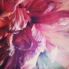 pétalas (meeeeeeeeeel) Tags: flowerart art abstrato abstraction natureza nature gracious ruffled ruffles iphoneography iphone hipstamatic squareformat tonsderosa shadesofpink pink flor flower petals closeup macro details pétalas hibisco hibiscus flowers flores garden jardim