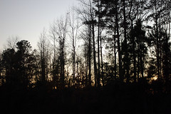 Woods Near Our Apartment Complex. (dccradio) Tags: lumberton nc northcarolina robesoncounty saturdayevening evening dusk sunset tree trees nature natural landscape outside outdoors sky eveningsky nikon d40 dslr