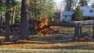 Storm-damaged Trees