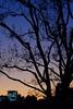 宵混ぜる 1 (Yuri Yorozuna / 萬名 游鯏(ヨロズナ)) Tags: pentaxsmctakumar55mmf18 twilight 夕方 夕暮れ 夕焼け evening sunset 日没 日暮れ 夕闇 逢魔が時 逢魔ヶ時 逢魔ケ時 黄昏 黄昏時 誰彼 シルエット silhouette 影 gradation グラデーション color 色 色彩 木 樹木 植物 tree plants plant 枝 branch 夕空 空 夕焼け空 夕暮れ空 eveningsky 宵 nightfall 東京都 東京 tokyo japan shinjukuward shinjuku 新宿区 新宿 若松河田 wakamatsukawada kawadacho 河田町 曙橋 akebonobashi dusk 薄暮 dim vesper