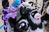 DSC02203 (Kory / Leo Nardo) Tags: fur furry fursuit fursuiting costume cosplay animal fursona space camp party alameda faction brewing 12118 pupleo thebayareafurries