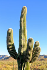 Tucson Mountain Park (dpsager) Tags: arizona cactus dpsagerphotography saguaro tucson tucsonmountainpark