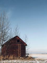 Gone but not forgotten (neilf3) Tags: sherwoodpark edmonton alberta canada winter crop field sky rustic old trees scenic shed barn farm