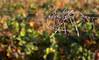 vendimia (Ibarnavarro) Tags: vendimia rioja sarmiento desenfoque otoño septiembre bodega